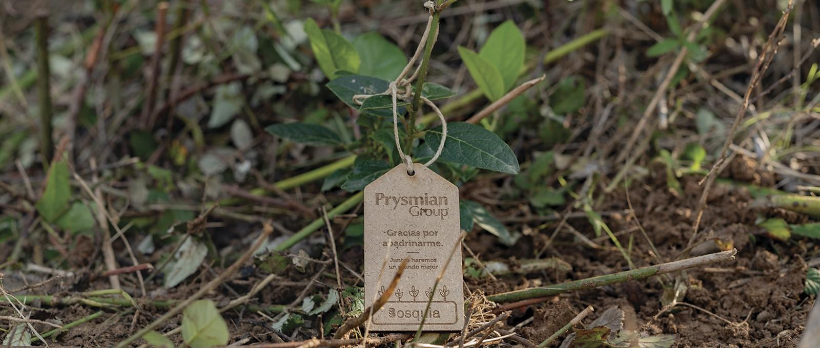 Prysmian Group apadrina la reforestación de dos bosques con la plantación de más de 1.000 árboles